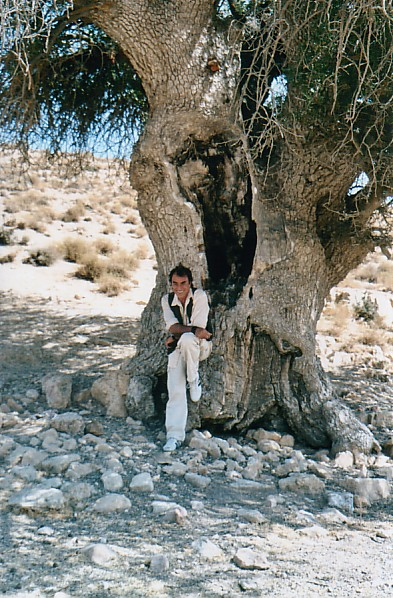 3000 year old tree2 - Jordan